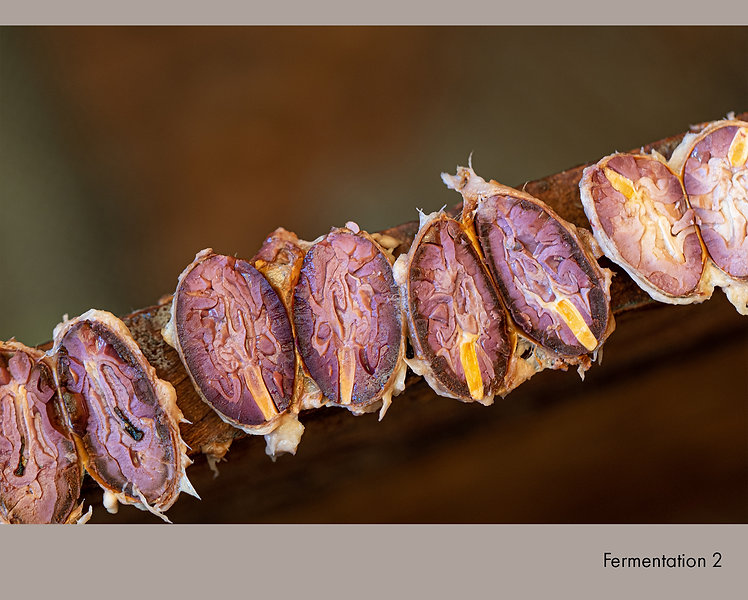 Fermentation 2.jpg