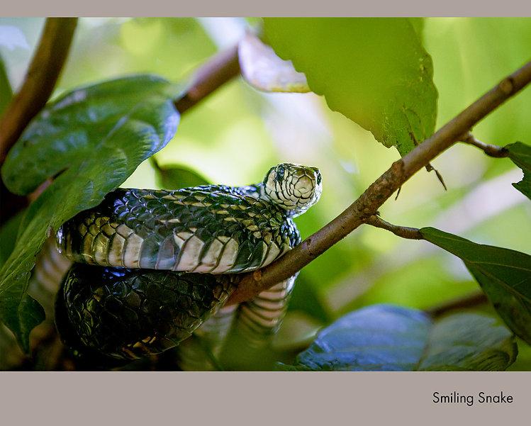 Smiling Snake.jpg