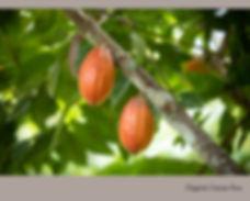 Organic Cacao Duo.jpg