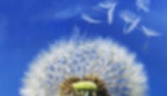 mbct flower image.jfif