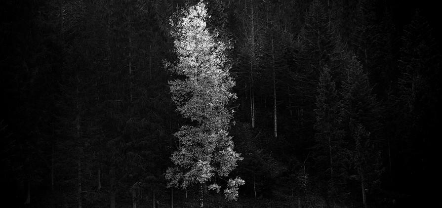 MICHAEL KINDERMANN_Tree.jpg