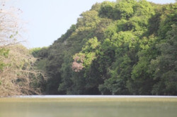 Leraba River forest galleries