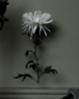 marie-lisette cropp s2_2.jpg