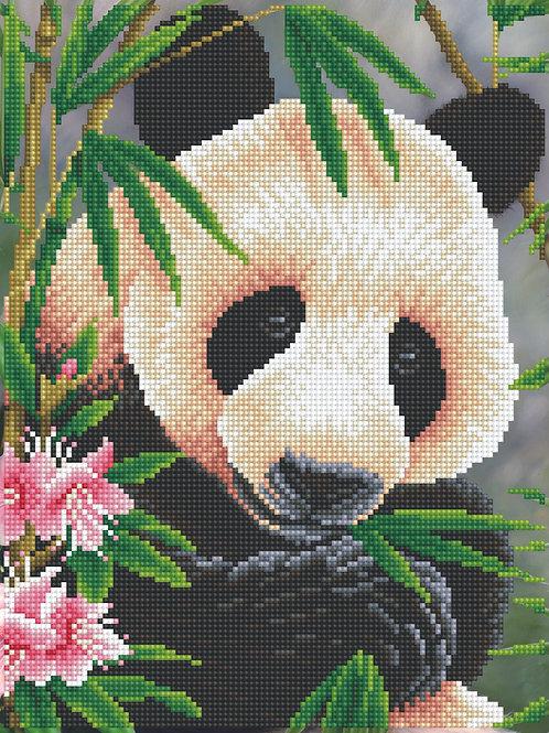 Panda Prince