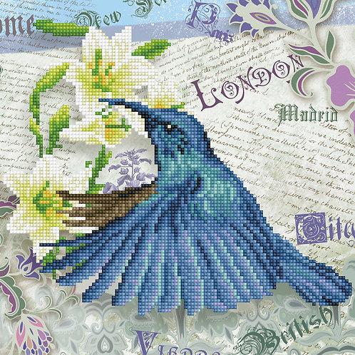 Hummingbird Travels