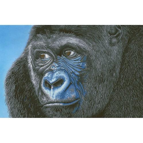 Kibali Western Lowland Gorilla