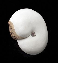 Small Placenticerus