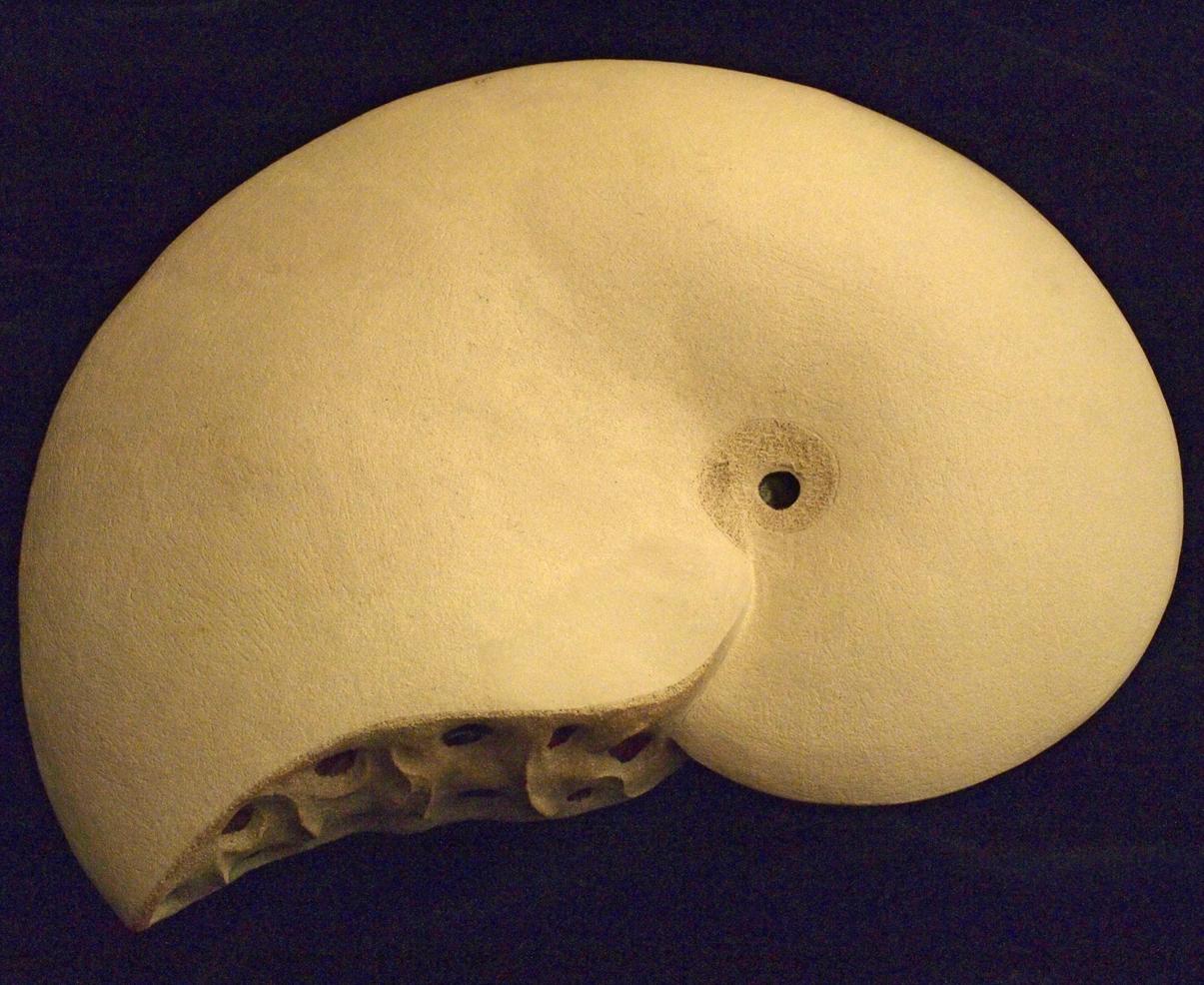 Placenticerus
