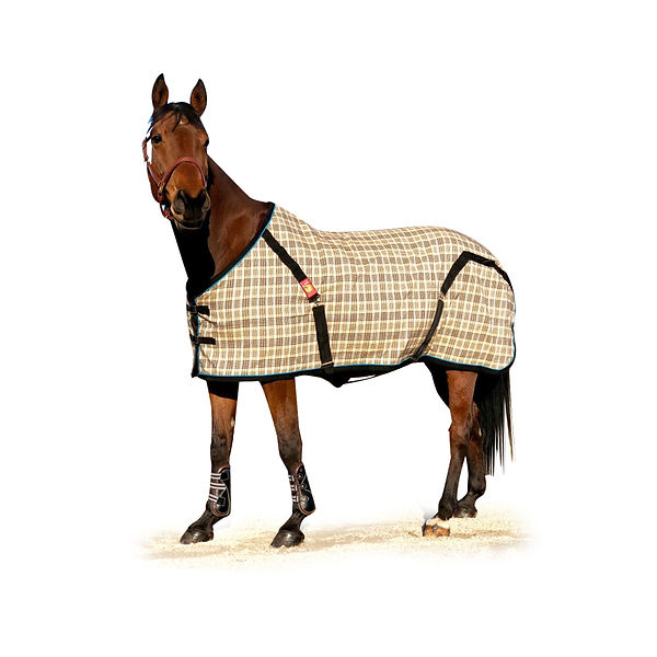 Baker Sheet, Custm Baker Sheet, Custom Horse Blankets