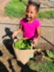 Price Head Start Swiss Chard.jpg