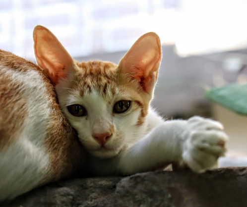 Cat-o-nine-lives