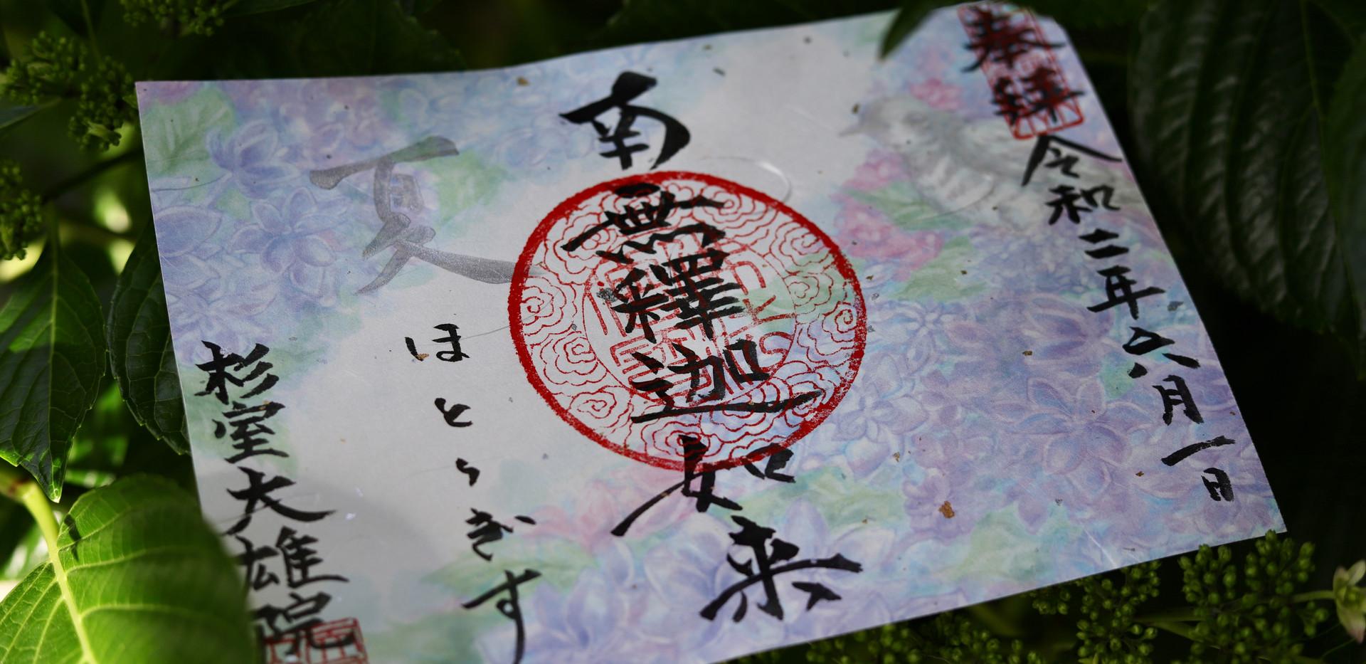 夏季限定・紫陽花
