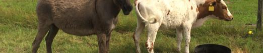 Donkey Marjorie