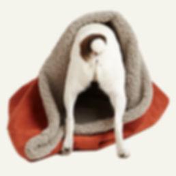 Dog_rear.jpg