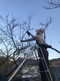 秋〜冬は枝の剪定