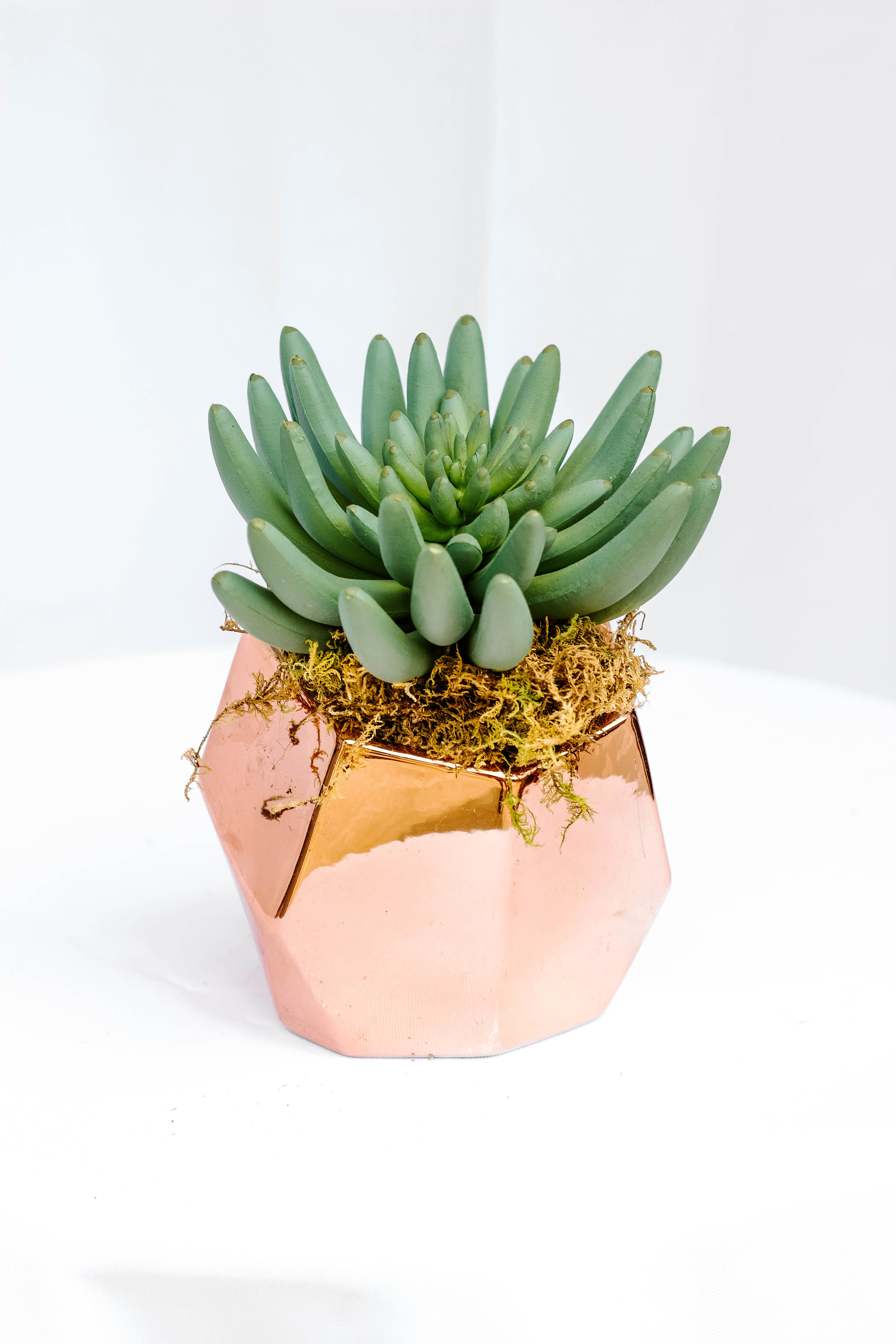 Copper Succulent Vase