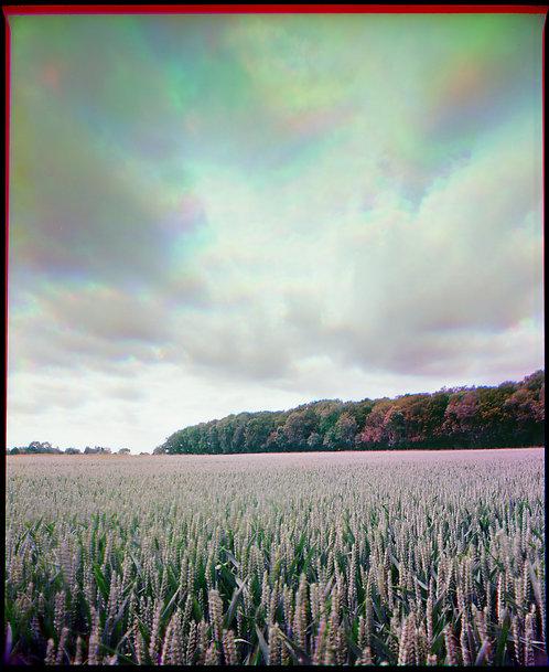 Colour and Movement Trichrome #4