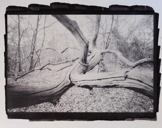 Tree pinhole #1