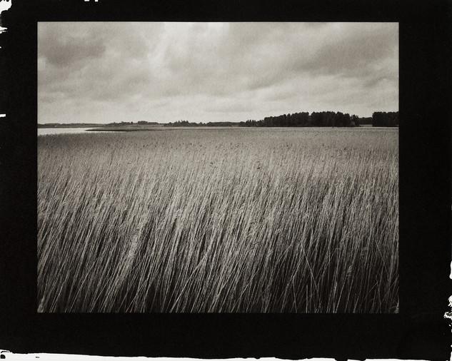 Reeds at Snape Malting