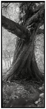 Twisted Chestnut