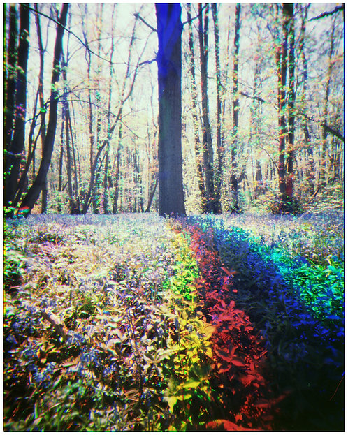 Rainbow Trichome