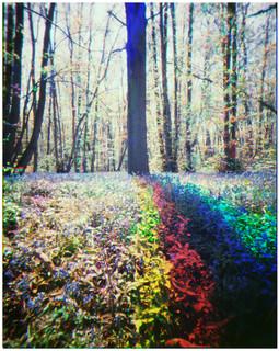 Rainbow Bluebells