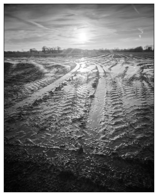 Suffolk winterscape