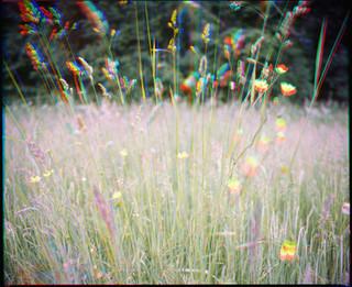 Dancing grass
