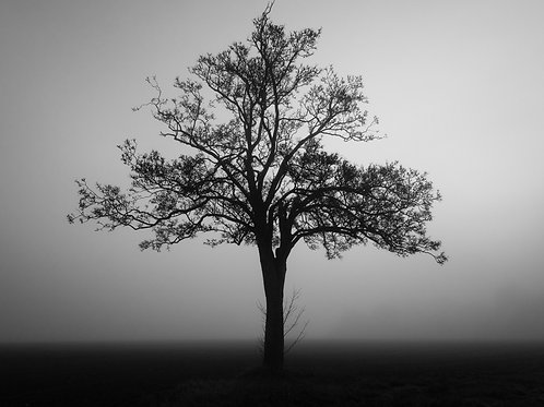 Fog bound tree