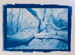 Tree pinhole #2
