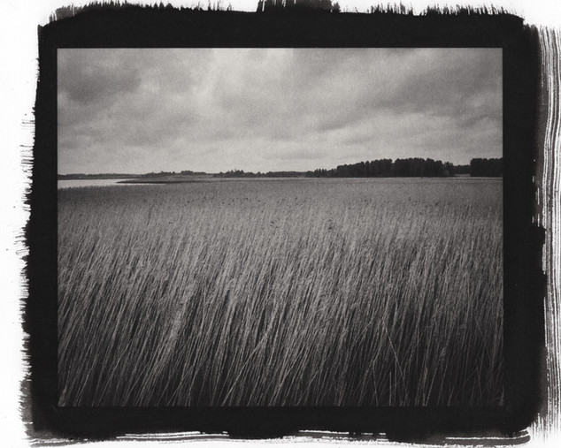 Reeds at Snape - Gold toned Kallitype