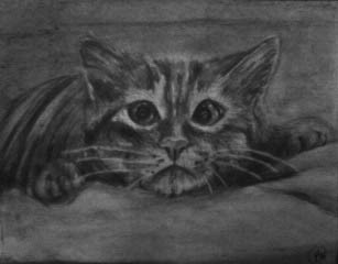 """""""Cat Drawing"""" 8.5x11 in."""