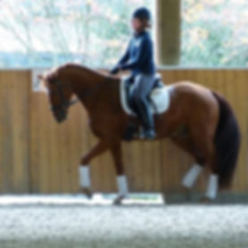 Charismatique and Heather Oleson in a clinic with top International Dressage trainer Conrad Schumacher