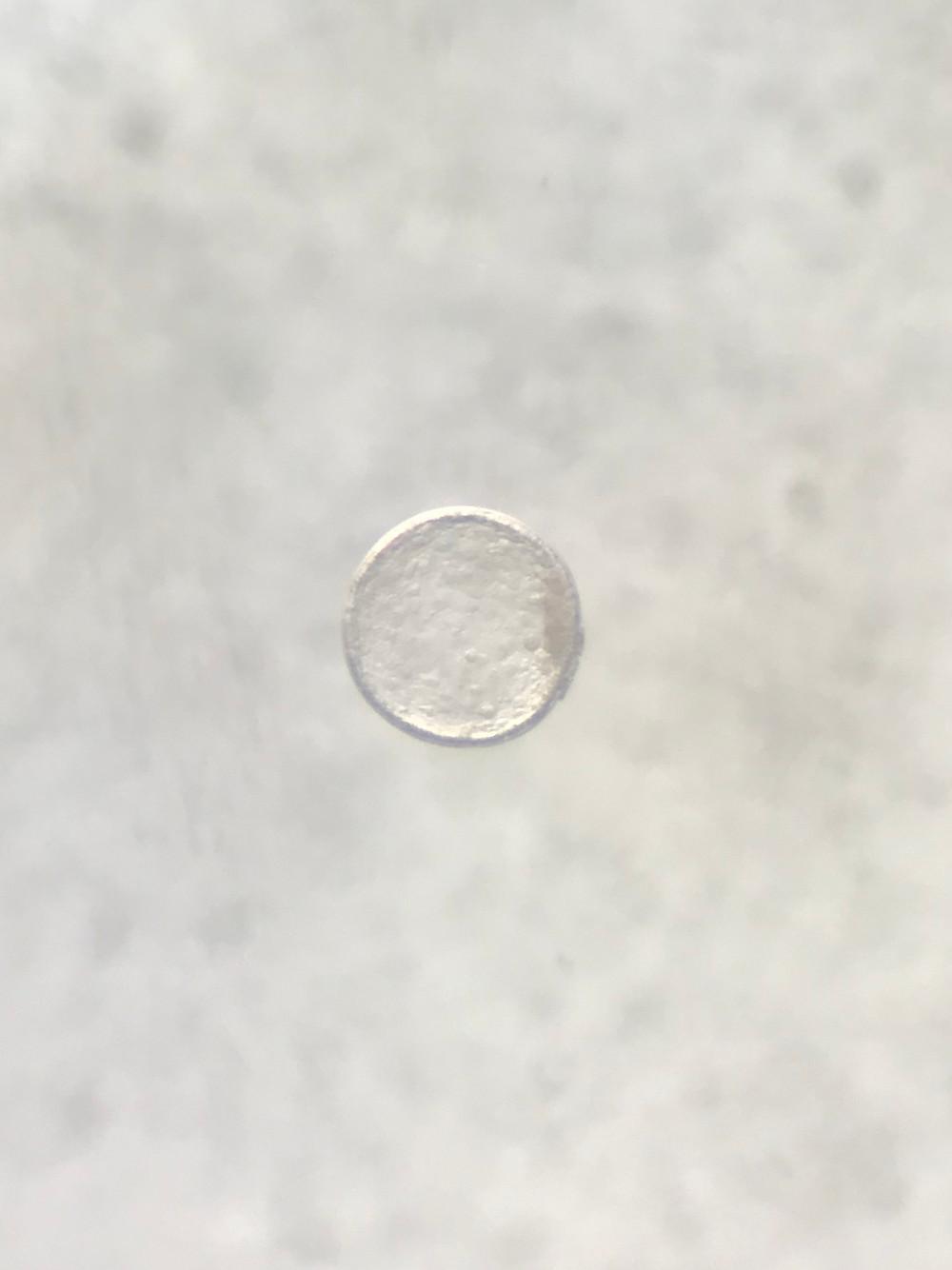 Embryo from Gaudi x Sezuan x Riccione
