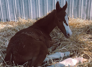 First foal of the year!!!