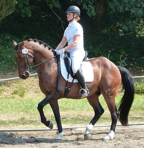 KWPN gelding Victor (Welt Hit II x Purioso), successful International Grand Prix dressage horse