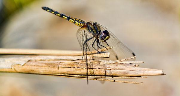 dragonfly-3011698.jpg
