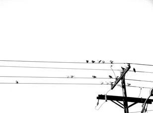 Williams_Grace_Birds.jpg
