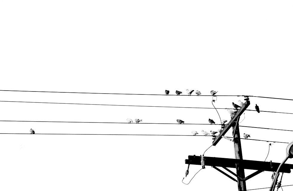 Williams_Grace_Birds_edited.jpg