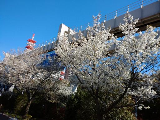 すっかり春ですね~🌸