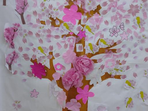 遅咲き桜🌸