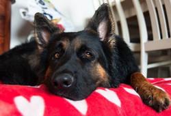 kan ikke vente med at komme hjem til min skøre hund _3 og måske savner jeg også lidt jyden _)