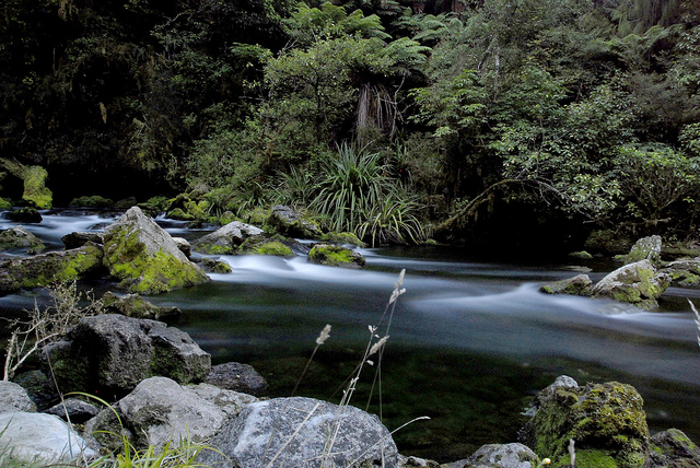 Pearse Resurgence, NZ