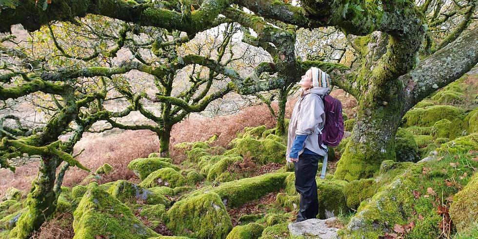 Hidden Dartmoor - Wistman's Wood, Tors, Wild Ponies and Teign Valley - CAMPING