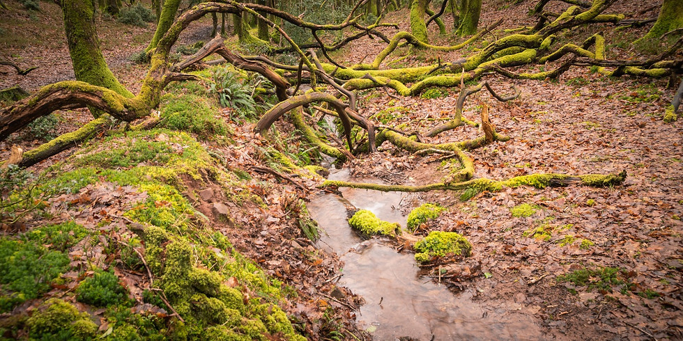 Quantock Hills, Dead Woman's Ditch, Area of Outstanding Natural Beauty