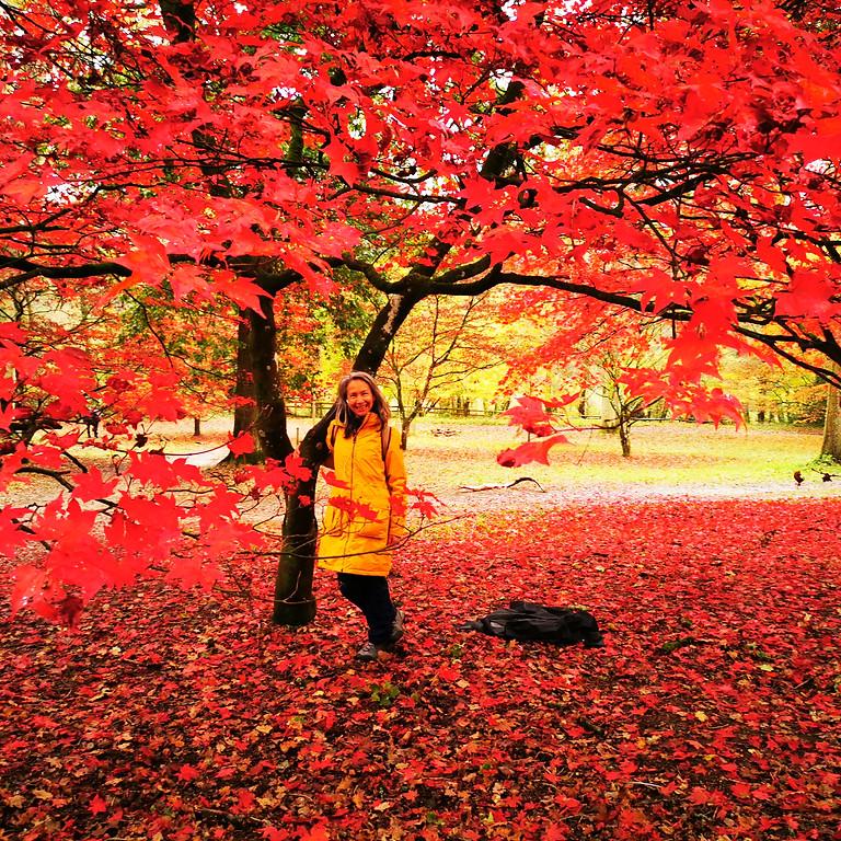 AUTUMN COLOURS! Surrey Autumn Arboretum Hike