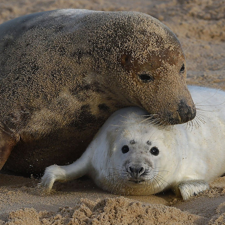 Norfolk Baby Seals watching and beach walk - MINIBUS included