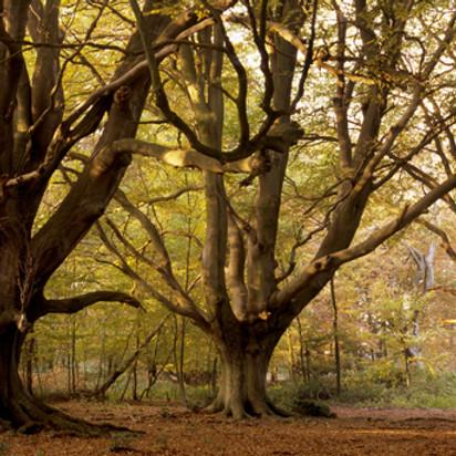 Enchanted Forest of Ashridge Estate - day hike