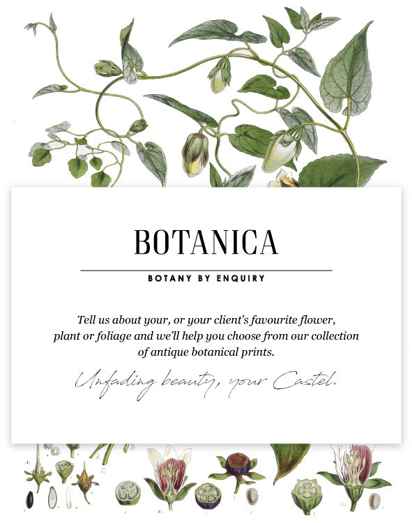 Castel Graphic Design for Botanica Range