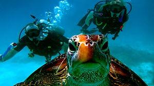 _DivingWithTurtle_1.jpg